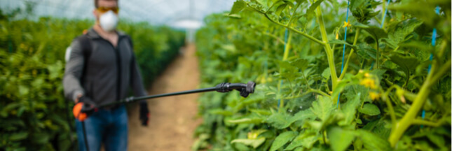 Insecticides: les dangers du chlorpyrifos, produit toxique toujours utilisé dans l'UE