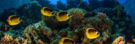 Israël s'entend avec des pays arabes pour sauver les coraux de la mer Rouge