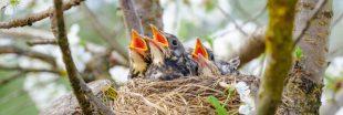Qui a parlé de formation des jeunes aux 9e Assises Nationales de la Biodiversité ?