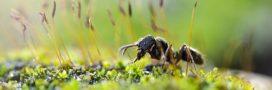 Les fourmis dans le potager: anges ou démons?