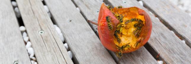 Comment lutter contre les guêpes au jardin