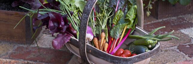 Découvrez les fruits et légumes de saison en juin, les fromages et les viandes