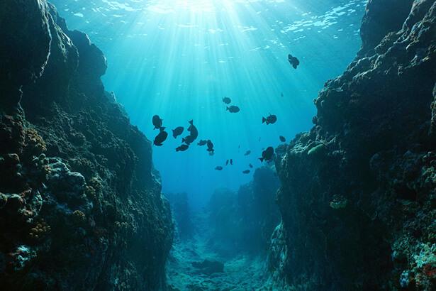 poissons fonds marins polynésie