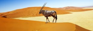 La Namibie contrainte de vendre ses animaux sauvages aux enchères