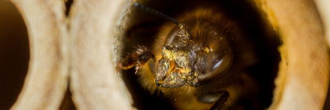 Des nids d'abeilles à base de déchets plastiques