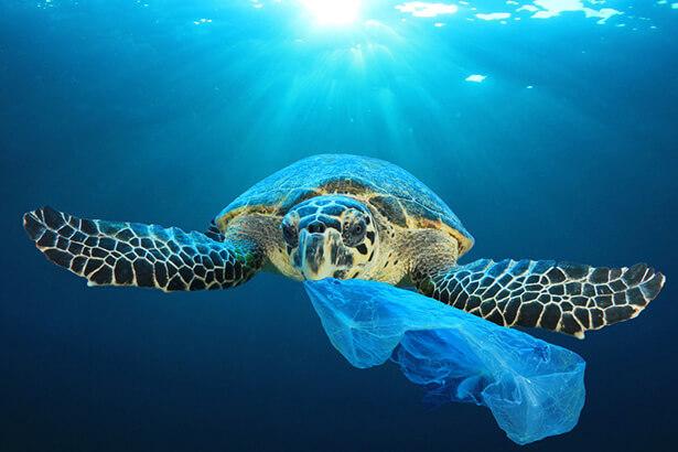tortue pollution océan plastique