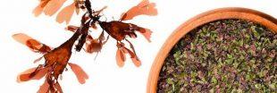 Sélection livre - Découvrez 'Les super-pouvoirs des algues' avec Régine Quéva
