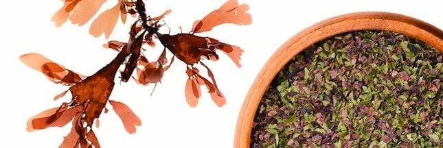 Sélection livre – Découvrez 'Les super-pouvoirs des algues' avec Régine Quéva