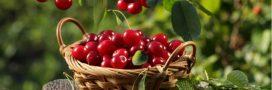Conseils jardinage: les gestes de juin au jardin bio et au potager