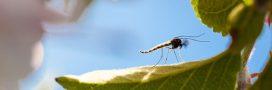 10 aliments qui éloignent les insectes naturellement