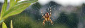 Idée reçue – Les araignées piquent la nuit dans les lits!