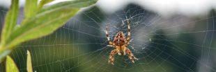 Idée reçue - Les araignées piquent la nuit dans les lits !