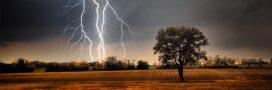 Comment soigner un arbre abîmé par une tempête