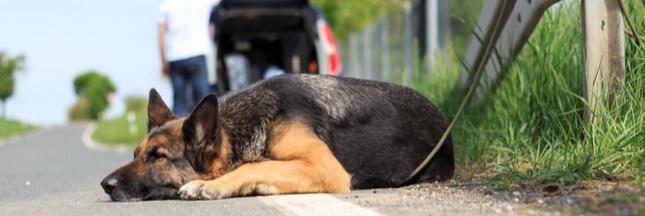 Abandons d'animaux : une loi s'impose pour en finir !