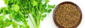 Utiliser la coriandre fraîche en 5 astuces beauté