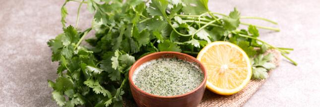 La coriandre fraîche en cuisine : nos recettes originales