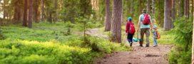 En forêt, sensibilisez les enfants aux écogestes!