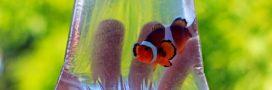 Aquarium éthique: réfléchissez à la provenance de vos poissons!