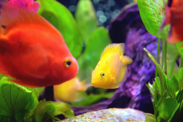 aquarium éthique