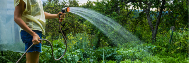 Calendrier jardinage en juillet : que semer, le potager et le verger
