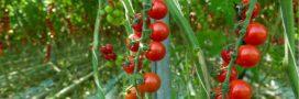 Agriculture bio – Le chauffage des serres autorisé mais sous conditions