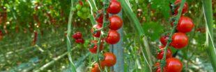 Agriculture bio - Le chauffage des serres autorisé mais sous conditions