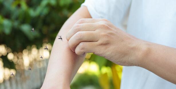 soulager piqure moustique