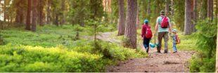 Balade en forêt : sensibilisez les enfants aux écogestes !