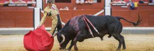 Carton rouge : le ministre de l'Agriculture, et du bien-être animal au premier rang d'une corrida