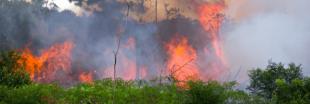 5 gestes simples pour (tenter de) sauver l'Amazonie en flammes