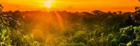#PrayforAmazonia: l'Amazonie brûle dans l'indifférence