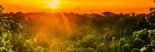 #PrayforAmazonia : l'Amazonie brûle dans l'indifférence