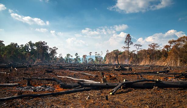 forêt amazonienne incendie