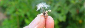 En août au potager, c'est le moment de produire ses graines maison