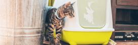 Les litières pour chat naturelles et écologiques