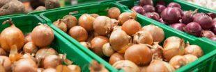 Des oignons du bout du monde dans nos supermarchés