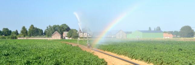 Canicule, sécheresse… Les restrictions d'eau sont-elles respectées?