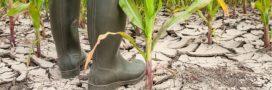 Liens entre changement climatique et usage des terres: Un nouveau rapport alarmant du GIEC