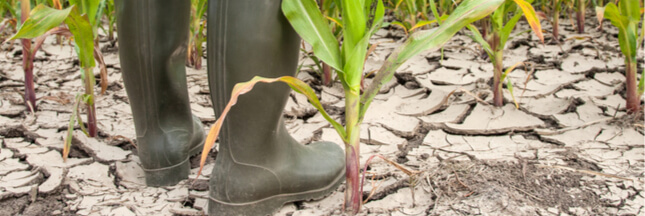 Liens entre changement climatique et usage des terres : Un nouveau rapport alarmant du GIEC