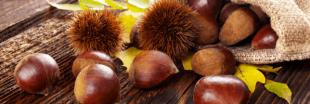 Marron et châtaigne : qui est comestible, qui est toxique ?