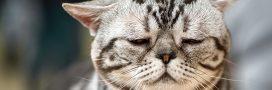 Maltraitance animale – Des animaux toujours victimes de tests pour le tabac!
