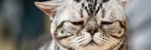 Maltraitance animale - Des animaux toujours victimes de tests pour le tabac !
