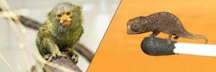 10 animaux minuscules et affreusement mignons