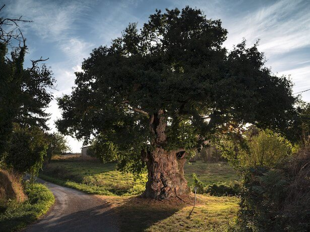 arbre de l'année 2019