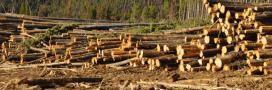 Gestion forestière – Le désastre des coupes à blanc