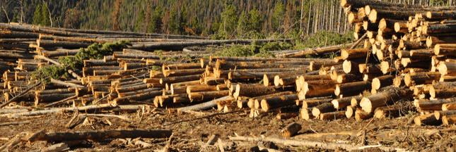 Gestion forestière - Le désastre des coupes à blanc