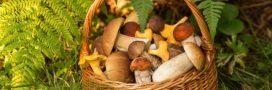10 champignons comestibles en automne