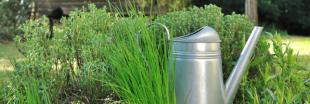 Plantes aromatiques - Comment planter de la ciboulette