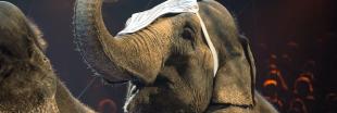 Inspirant - Le Danemark offre une retraite aux éléphants de ses cirques !