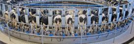 'En finir avec l'élevage intensif': 200 personnalités co-signent une tribune